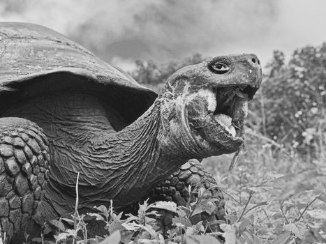 Meet a 100 year old turtle in Galapagos