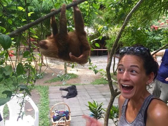 Hangout with a sloth (Nov. 2015)