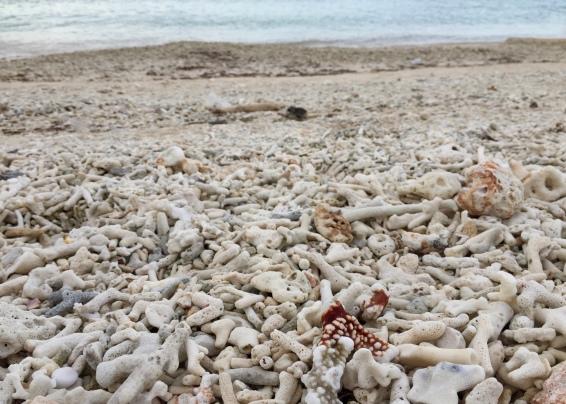 Coral galore