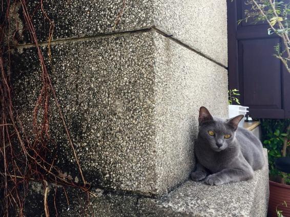 Cat friend guarding it's cafe