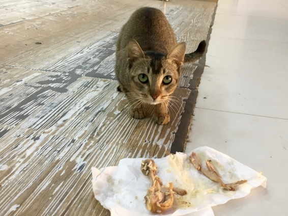 Airport kitty friend