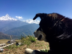 pup in the Himalayas