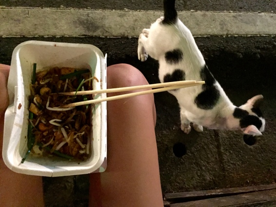 Cat friend also wants the pad thai