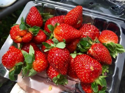 $1 for a tray at the Kea Farmer's Market