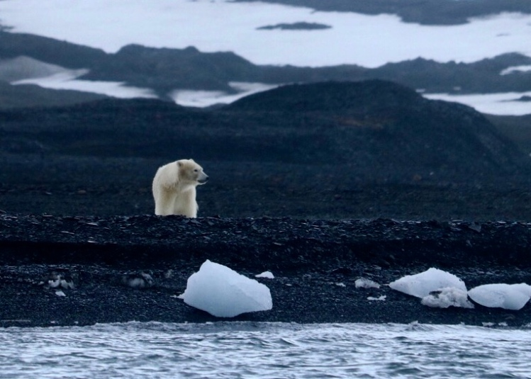 Polar Bear Moody