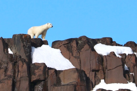Polar Bear Cliff